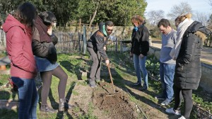 Un groupe d'adultes apprend à ratisser au potager