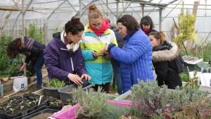 3 personnes apprennent à bouturer des plantes vivaces
