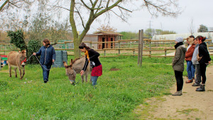 4 personnes observent deux agents qui sont en train de promener des ânes avec une corde et un licol