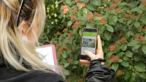 une personne prend en photo une plante avec on téléphone afin de l'identifier avec l'application Plant'Net