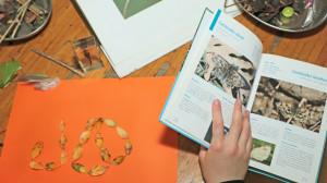 une main d'enfant tient un livre sur les insectes et différents élements naturels sont disposés
