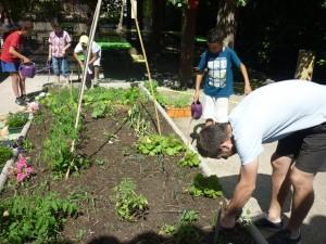 Entretien du jardin potager de l'accueil de loisirs « La clé des champs » avec des enfants et leur animateur