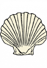 Illustration de coquille Saint-Jacques