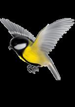 Illustration d'une mésange les ailes déployées