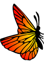 Illustration de papillon orange et jaune