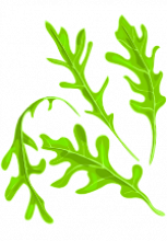 Illustration de feuilles de roquette