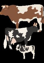 Illustration d'un taureau, d'une vache et d'un veau