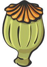 Capsule de coquelicot