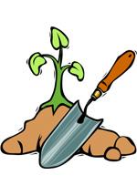 Plante et transplantoir
