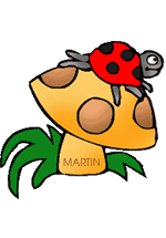 Coccinelle sur un champignon - Auteur : Martin