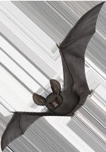 Illustraion d'une chauve-souris en vol