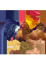 IIlustration d'un coq, d'une poule et d'un poussin