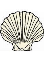 Illustration de coquille Saint-Jacques