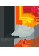 Illustration d'oiseau avec une tête de coq, un corps de pigeon et des pattes de canard