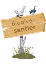 illustration d'un panneau un bois, cloué sur une branche plantée dans le sol, sur lequel est marqué « Biodiver sentier »